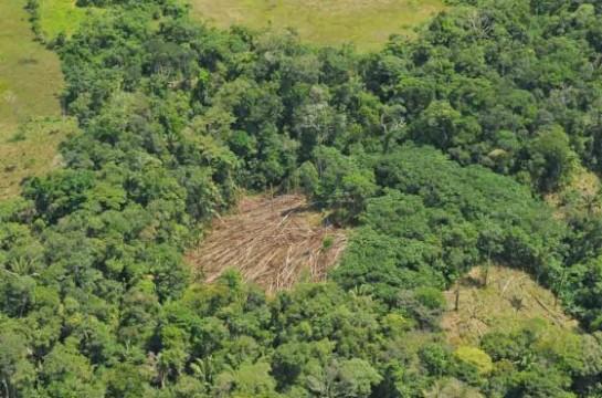 deforestacion_dudosa