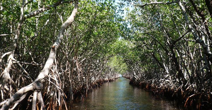 1_mangroves